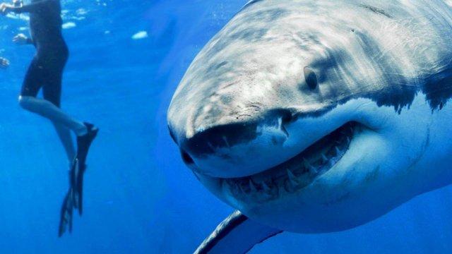 Paradise Beach: La Top 5 dei mostri marini al cinema