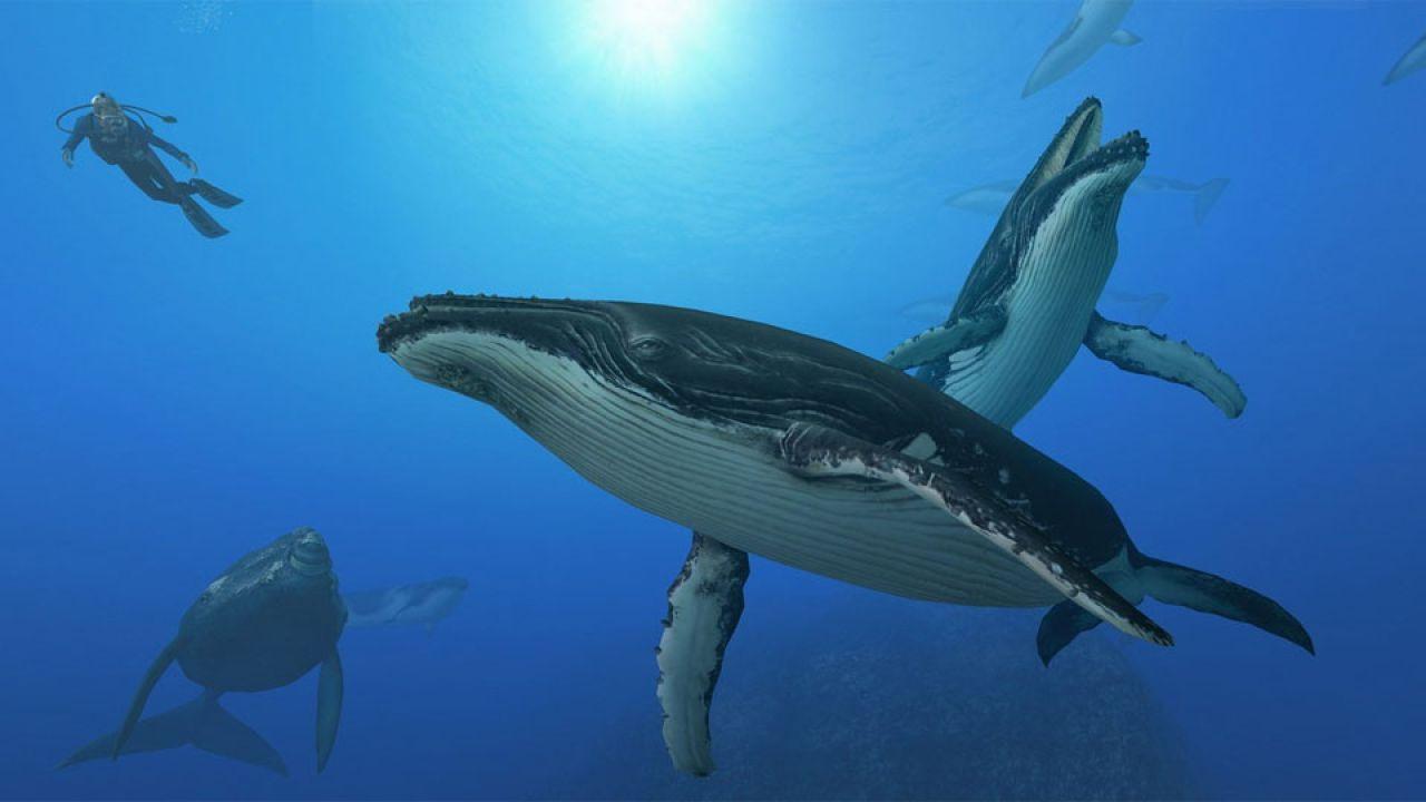 recensione Endless Ocean 2: Avventure negli Abissi