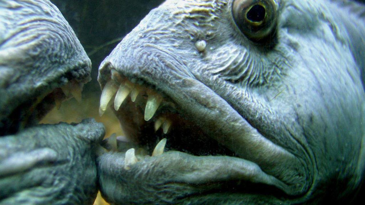speciale Gli animali più terrificanti e strani della natura