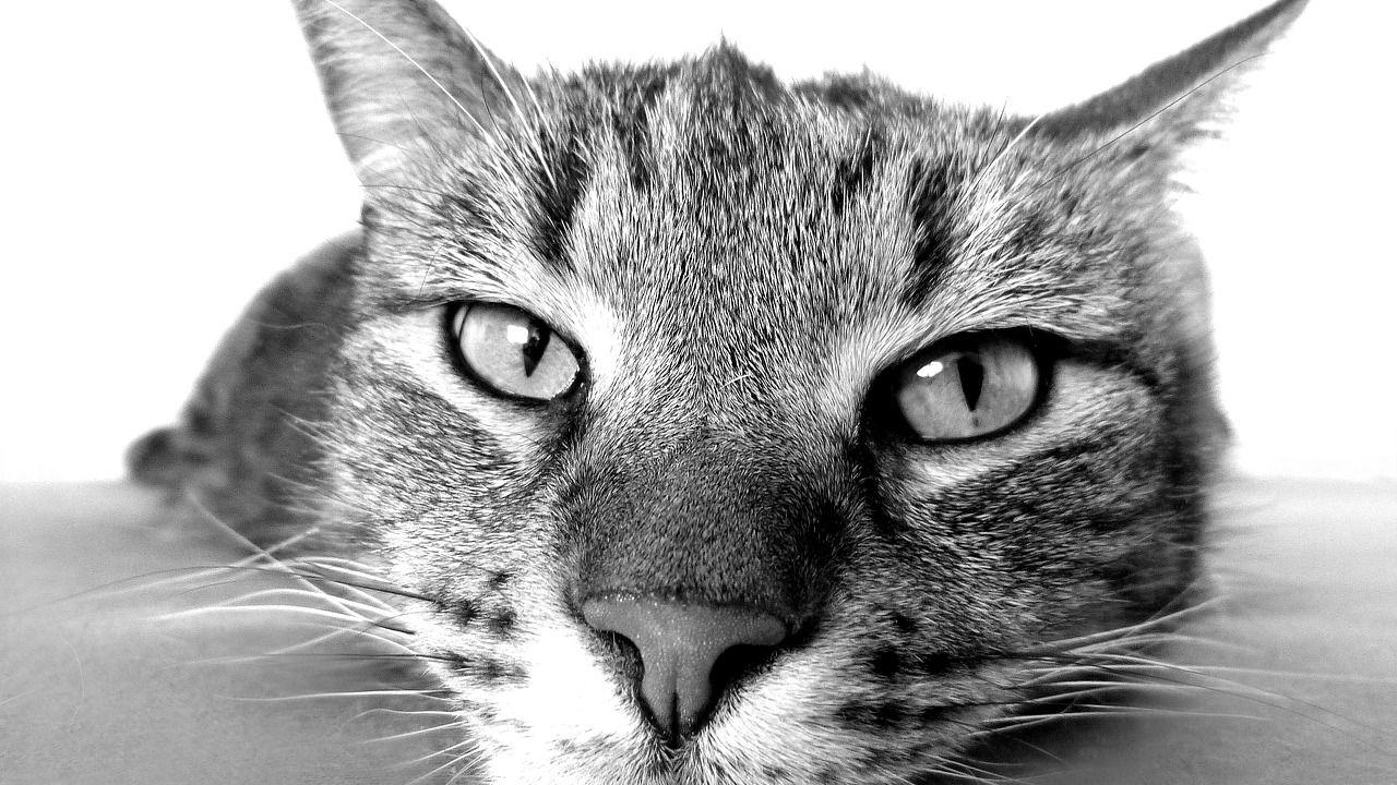 Un viaggio nell'affascinante mondo dei gatti in compagnia della scienza