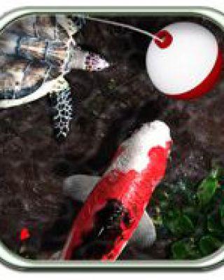 iFish Pond