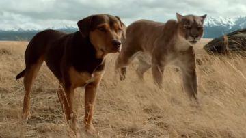 Video a dog's way home, il trailer del film tratto dal romanzo dell'autrice di qua la zampa!