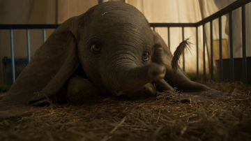 Video eva green vola assieme a dumbo nel nuovo video del live-action disney