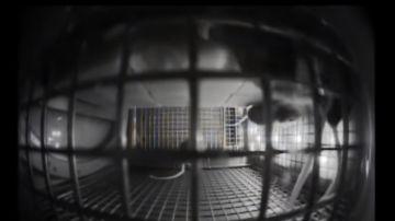 Video la nasa ha inviato dei topi nello spazio, ecco cosa fanno sull'iss