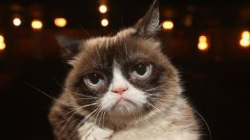 Video e' morto grumpy cat, il gatto da 2,4 milioni di fan su instagram
