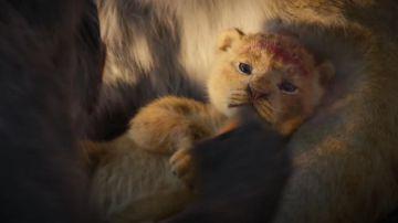 Video il re leone: la nostra video recensione del film diretto da jon favreau