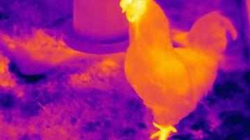 Video un drone a visione del calore si è dimostrato utile nella ricerca di un ragazzo scomparso