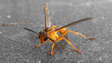 Video guardiamo il cruento attacco di una vespa verso un uccellino indifeso