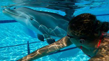 Video venite a conoscere il 'robot delfino' estremamente realistico e con uno scopo nobile