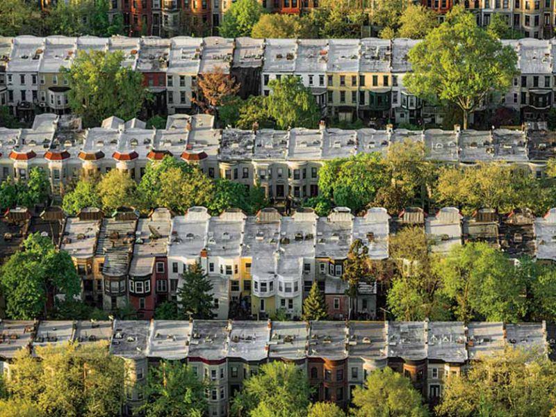 È stato osservato un curioso effetto che hanno gli alberi urbani sulle persone