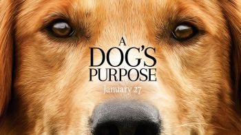 A Dog's Purpose: ecco il trailer ufficiale del film con Dennis Quaid
