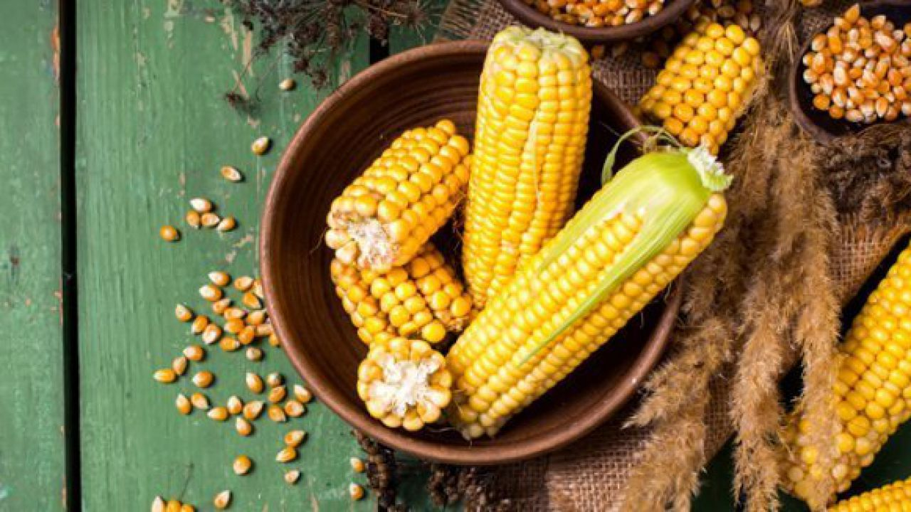 Alla scoperta del cereale più coltivato e prodotto al mondo