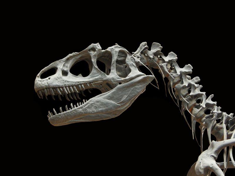 Anche i feroci Allosauri, se costretti, ricorrevano al cannibalismo