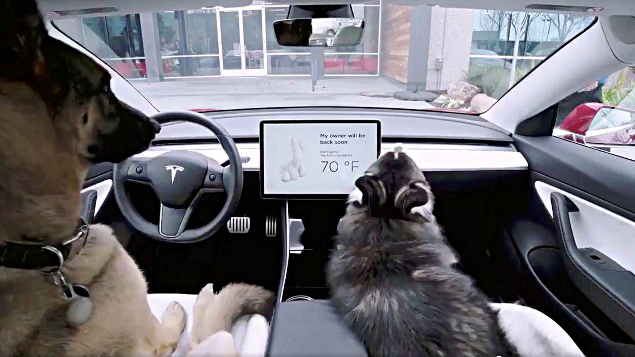 Aveva lasciato il cane nella sua Model S, evita una condanna grazie alla Dog Mode