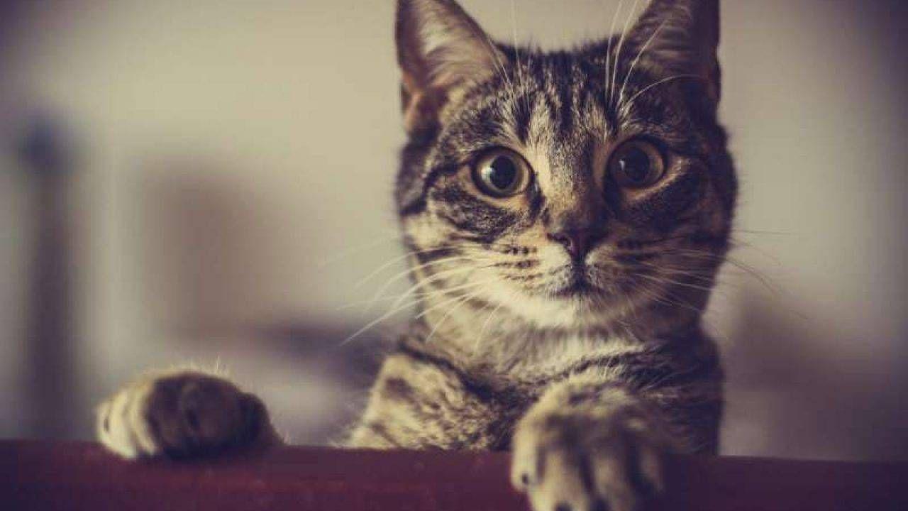 Catflix, dal Cile arriva la piattaforma streaming per gli amanti dei gatti!