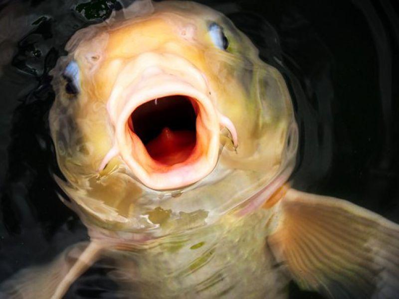 Come fanno i pesci a colonizzare laghi e stagni lontani dal mare? La risposta vi stupirà