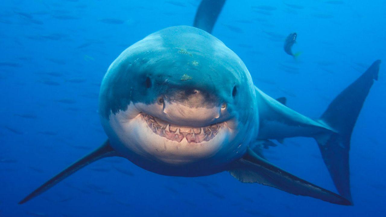 Da Super Shark allo Squalo: ecco 5 film per un'estate ad alta tensione