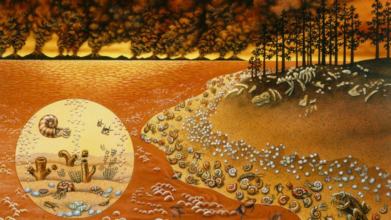 Dei fossili ci raccontano la causa della più grande estinzione di massa della storia
