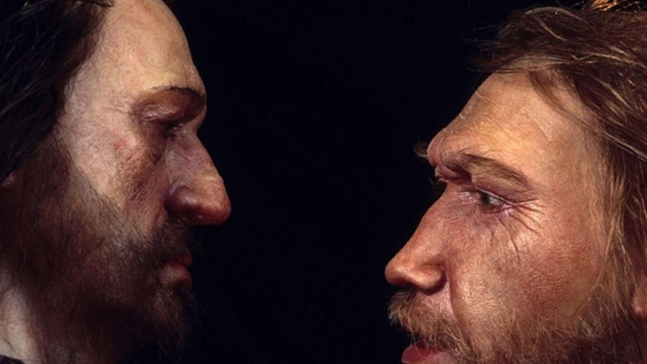 Dei mini-cervelli ibridi sono stati ricreati in vitro con dei geni dei Neanderthal