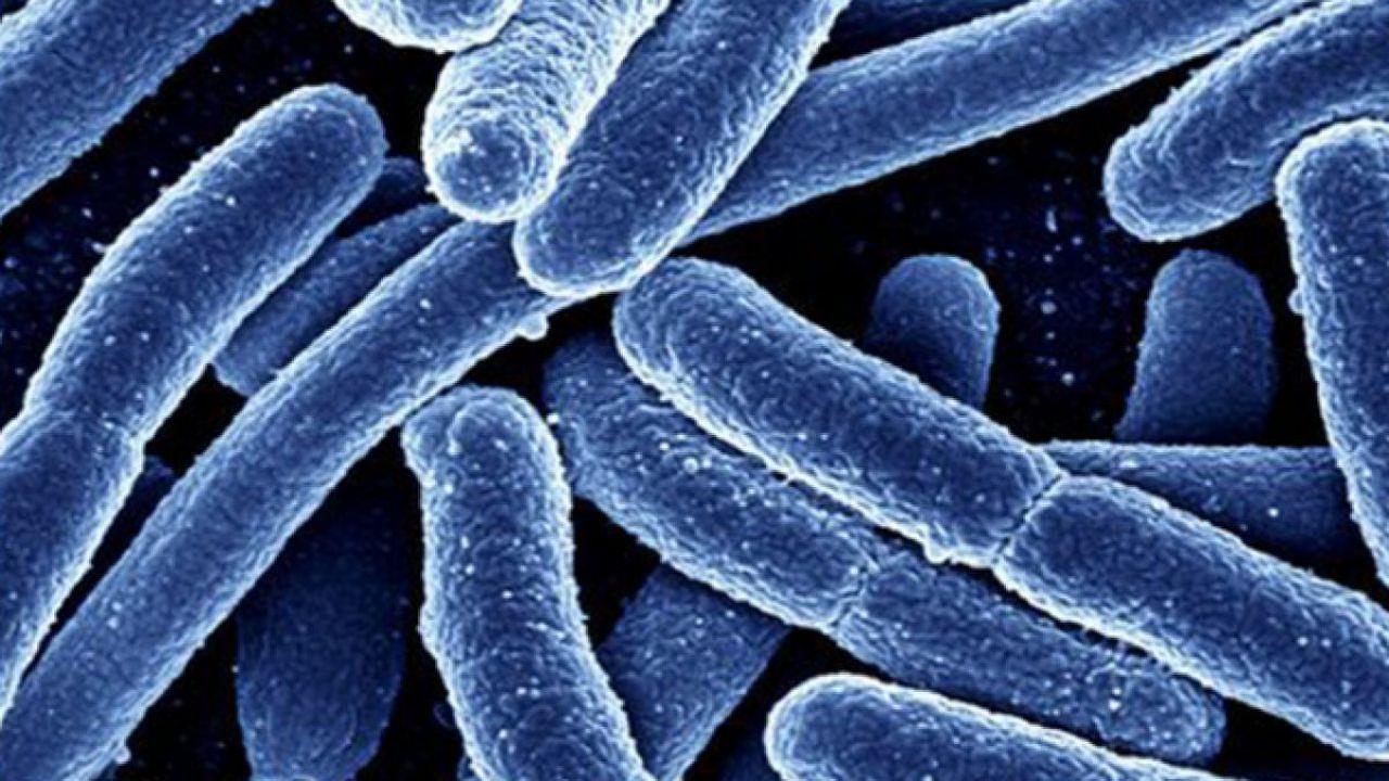 Dei virus geneticamente modificati potrebbero distruggere i famigerati super batteri