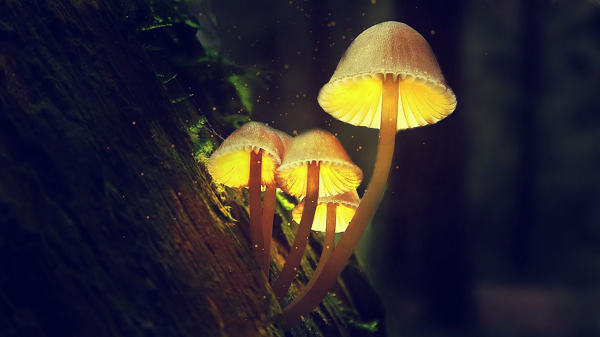 """Dobbiamo la nostra intelligenza ai funghi psichedelici? La """"teoria della scimmia drogata"""""""