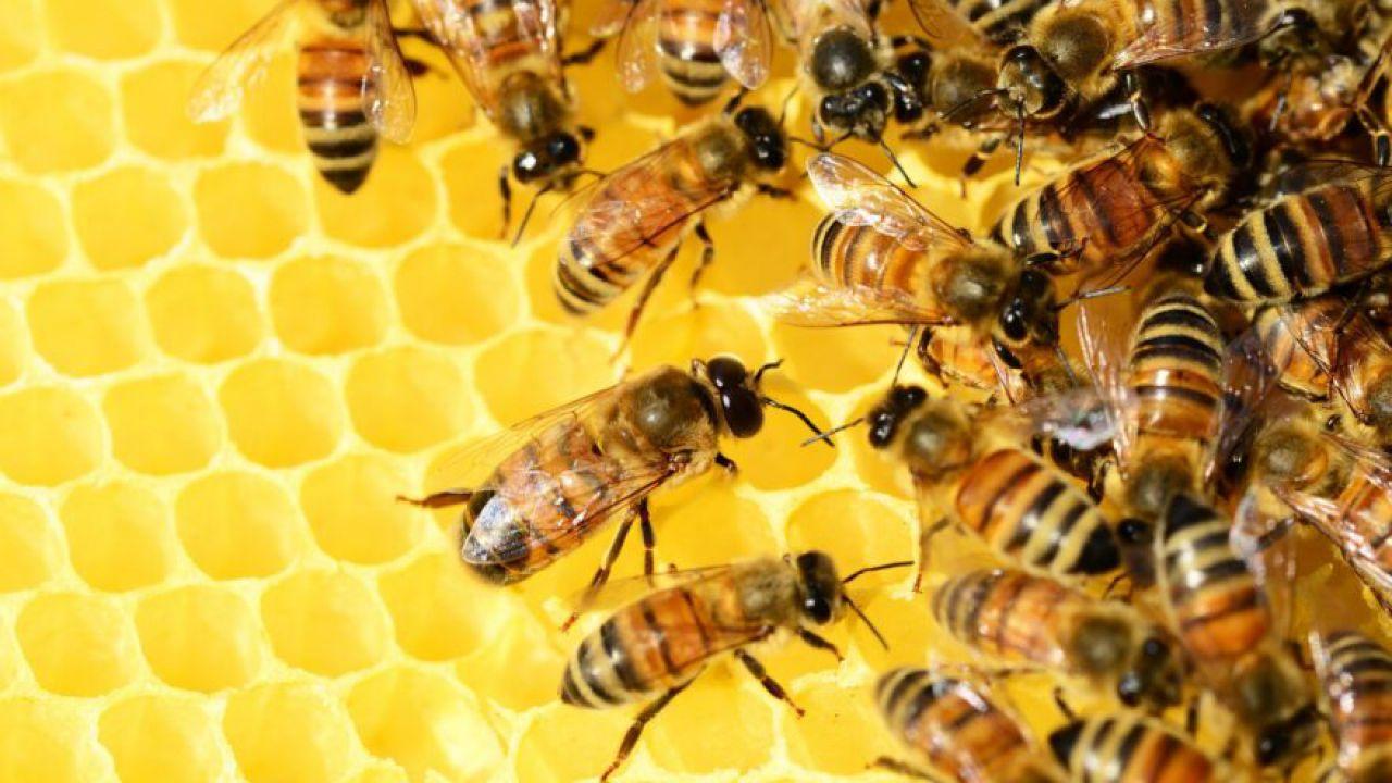 È stata creata la prima mappa delle di api di tutto il mondo: ce ne sono oltre 20mila