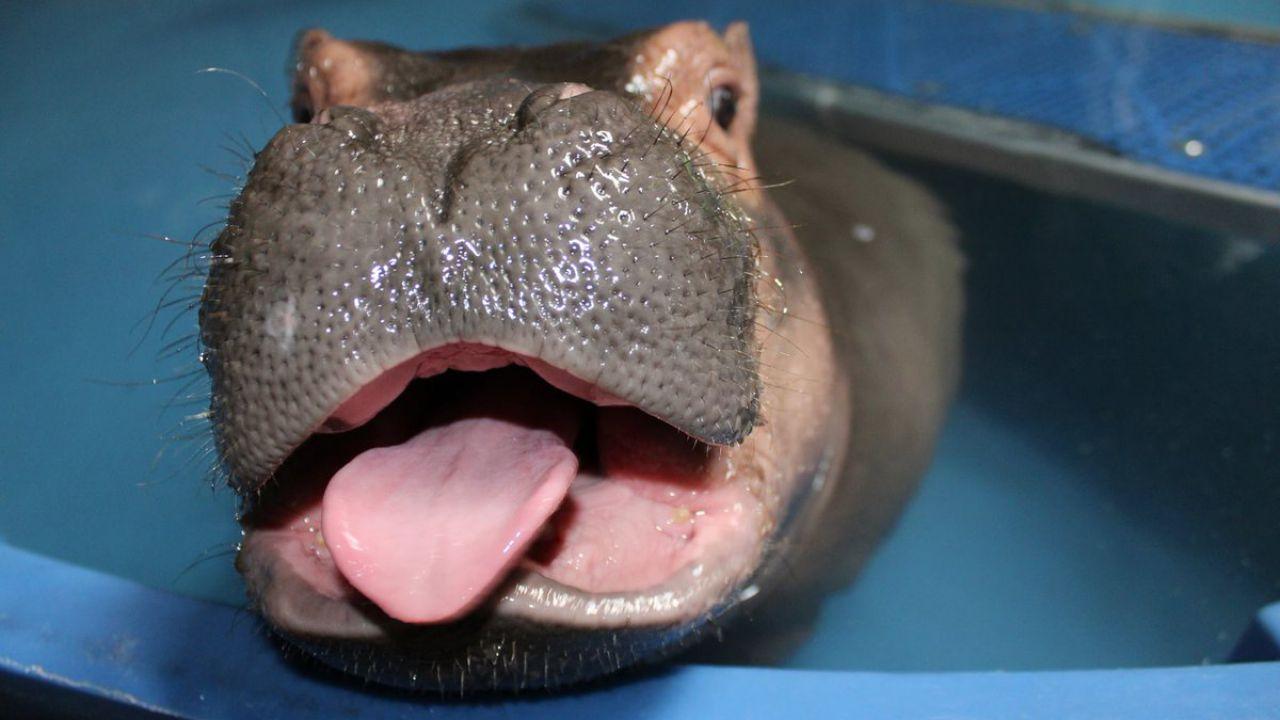 Ecco alcune delle 'lingue' più incredibili e strane del mondo animale
