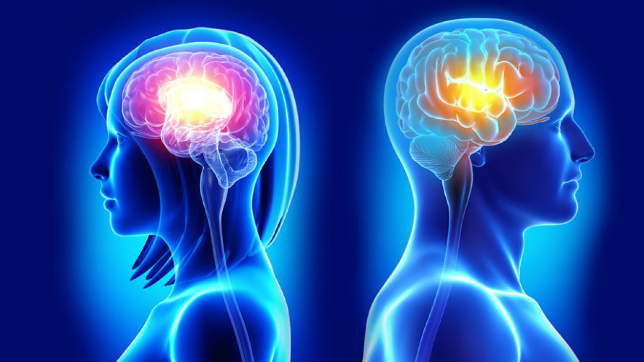 Esistono differenze tra cervello maschile e femminile?