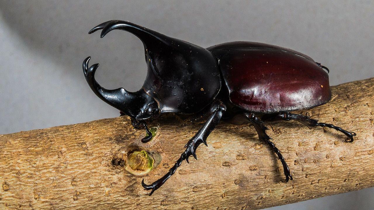 Estratto del materiale genetico da insetti intrappolati nella resina