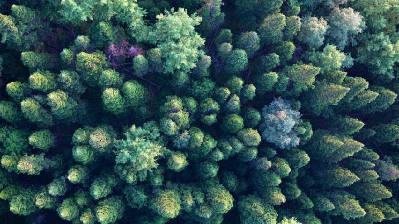 Gli alberi potrebbero salvare la Terra dai cambiamenti climatici, ecco come