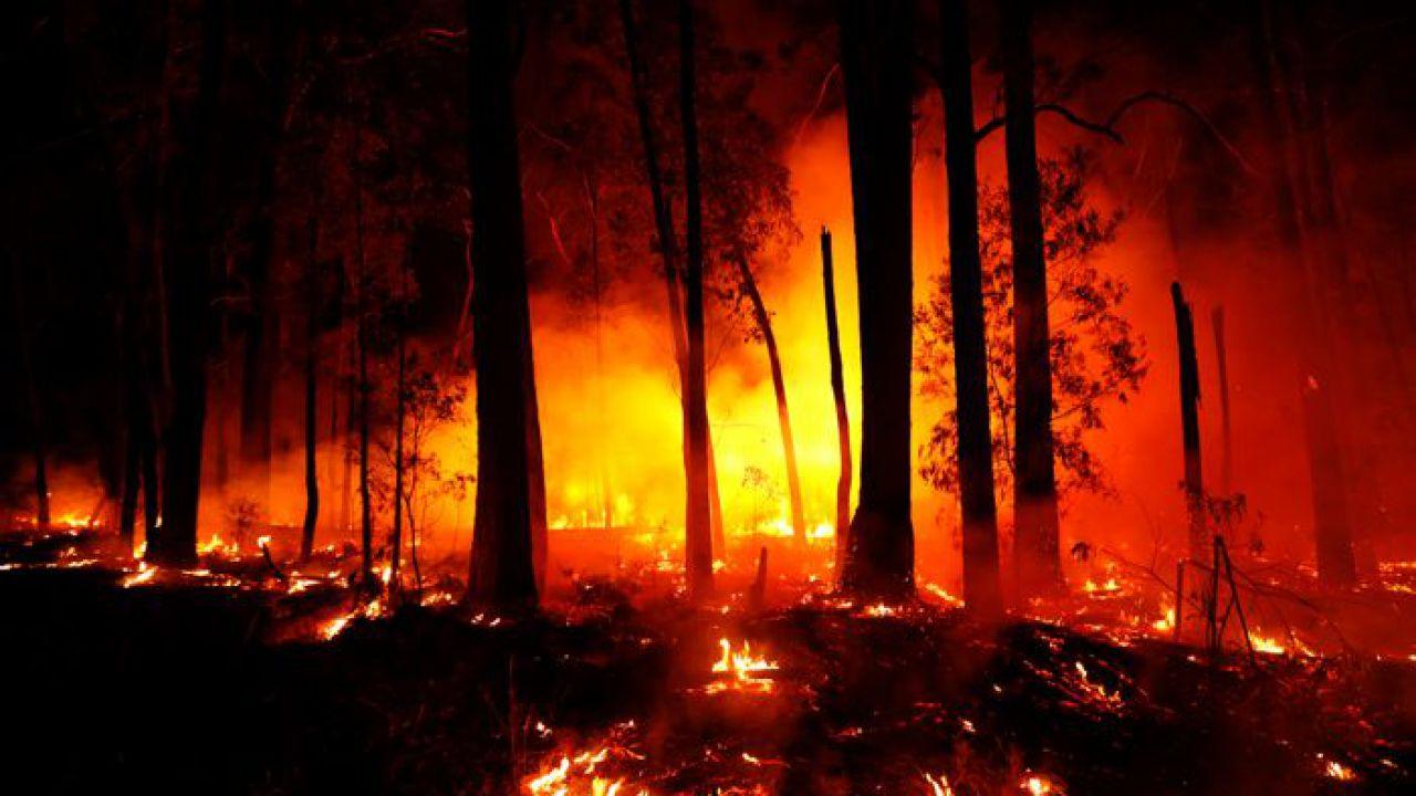 Gli incendi dell'Australia hanno portato 113 specie vicine all'estinzione