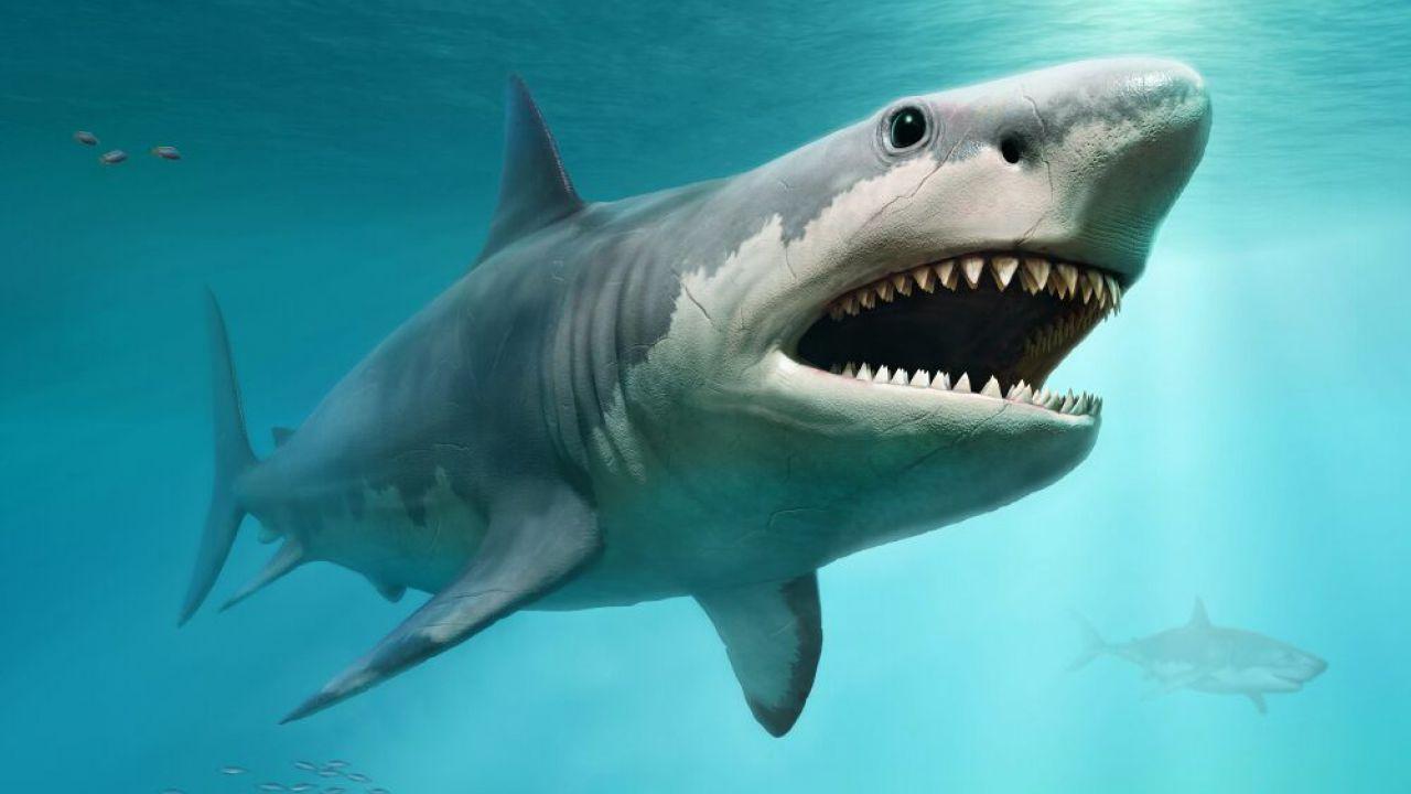 Gli squali, un tempo, potrebbero aver avuto le ossa... ma solo per poco