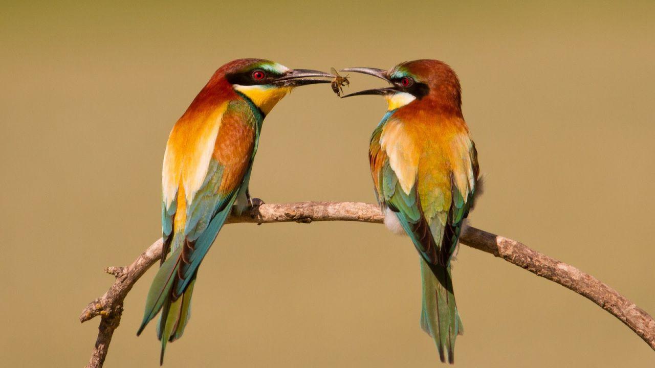 Gli uccelli condividono il loro cibo con membri della stessa specie che non ne hanno