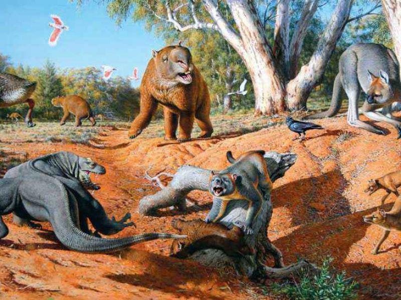 I primi australiani condivisero la terra con animali giganteschi
