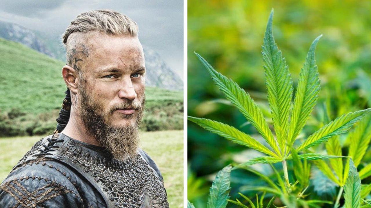 I Vichinghi potrebbero aver fatto uso di Cannabis durante l'esplorazione del Nord America?