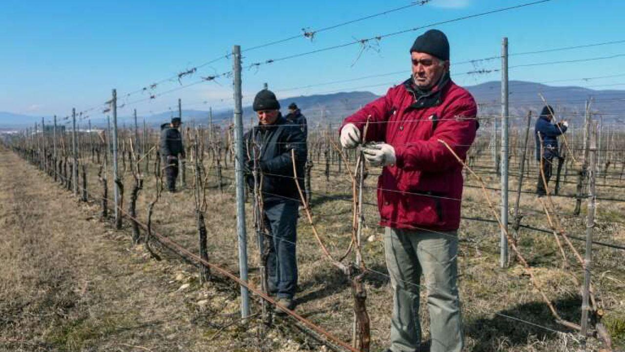 I viticoltori della Georgia ora vogliono produrre vino su Marte