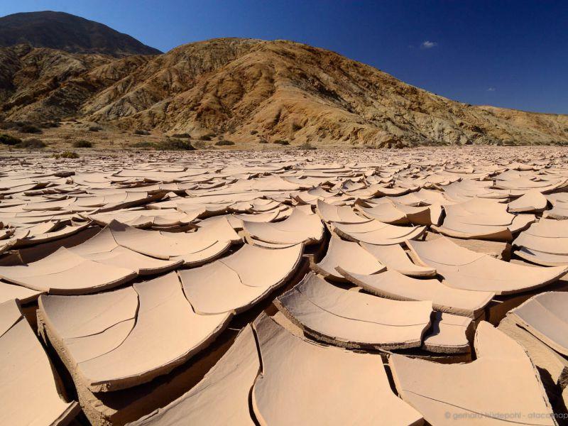 Il deserto più arido del mondo una volta era fertile grazie agli escrementi degli uccelli