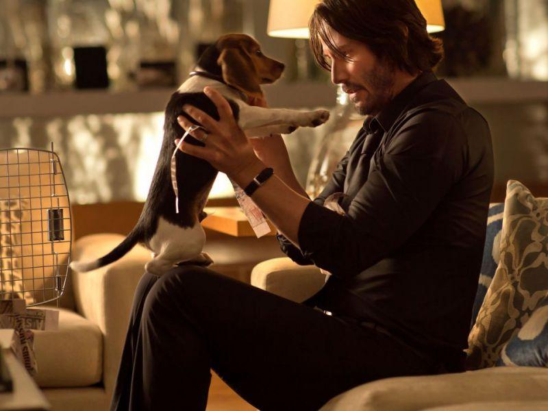 John Wick e la straziante morte del cane: come sarebbe andata senza quella scena?