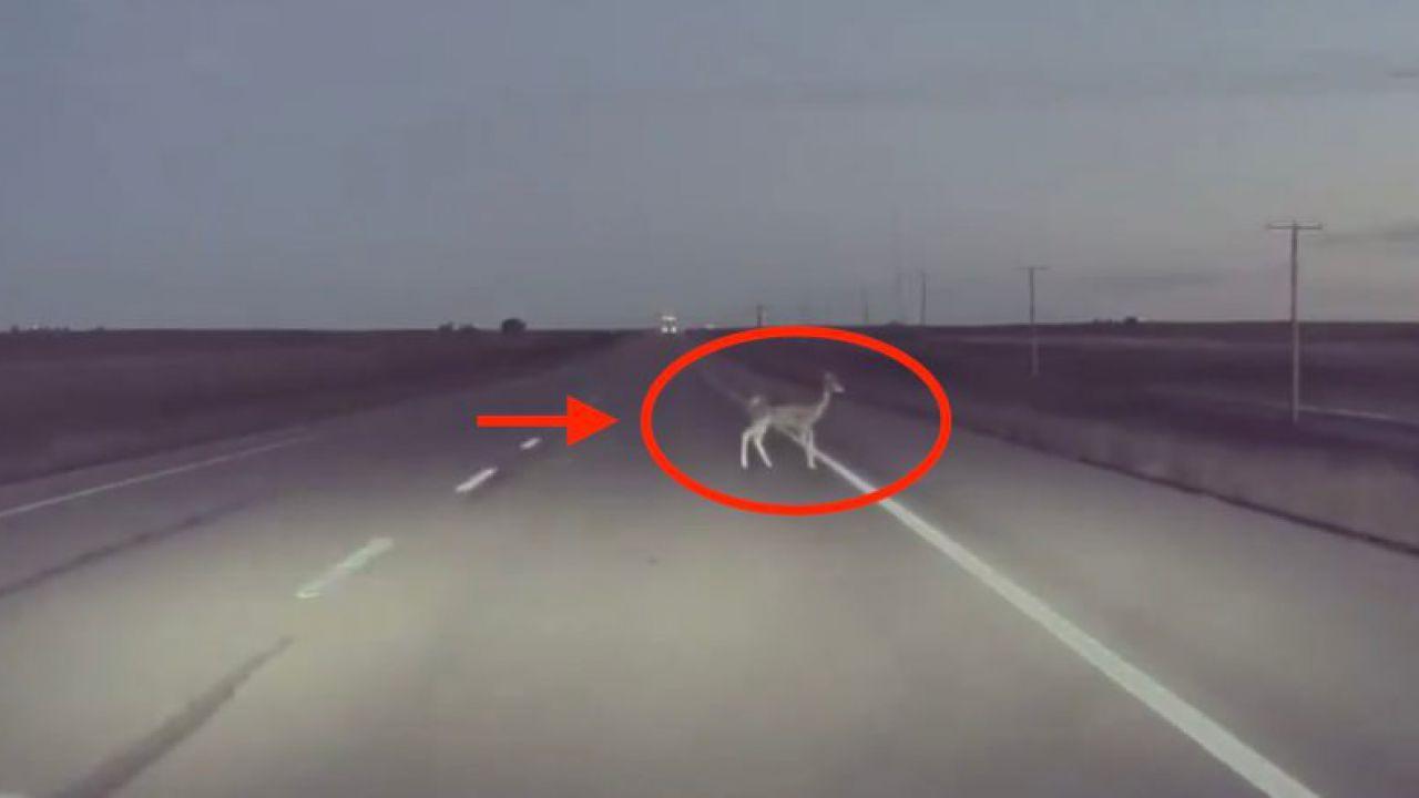 L'Autopilot di Tesla ha appena salvato la vita a un cerbiatto: la reazione è fulminea