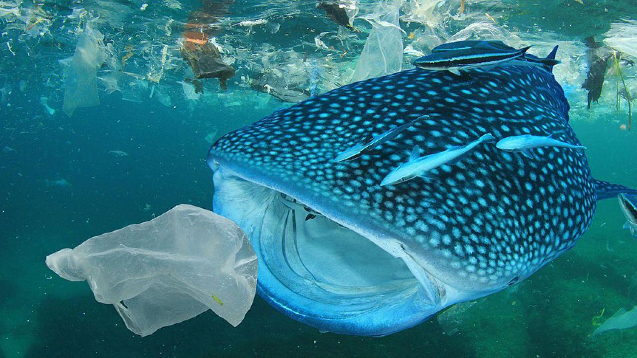 La plastica negli oceani sarà più dei pesci entro il 2050: Coca Cola e altre sotto accusa