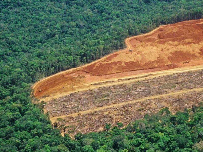 La prossima pandemia globale potrebbe arrivare direttamente dall'Amazzonia