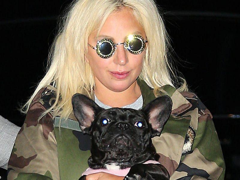 Lady Gaga, ritrovati sani e salvi i cani della cantante
