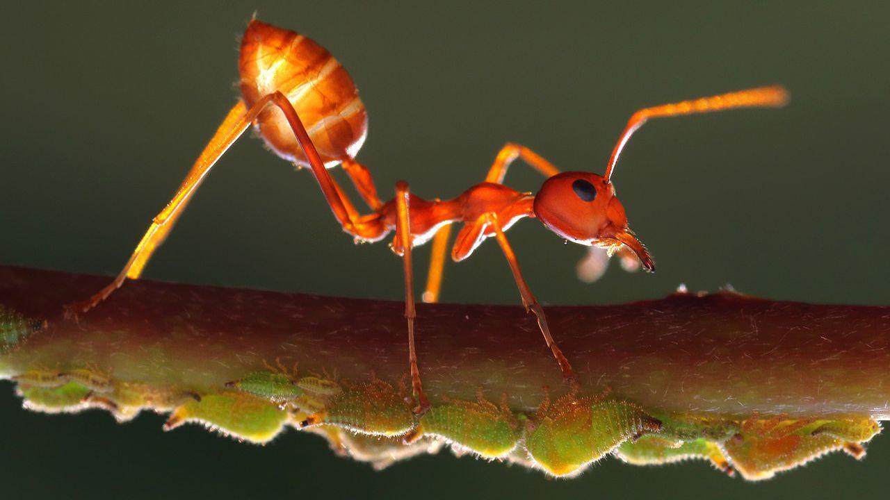 Prodotti Efficaci Contro Le Formiche le formiche potrebbero aiutare le piante a resistere più