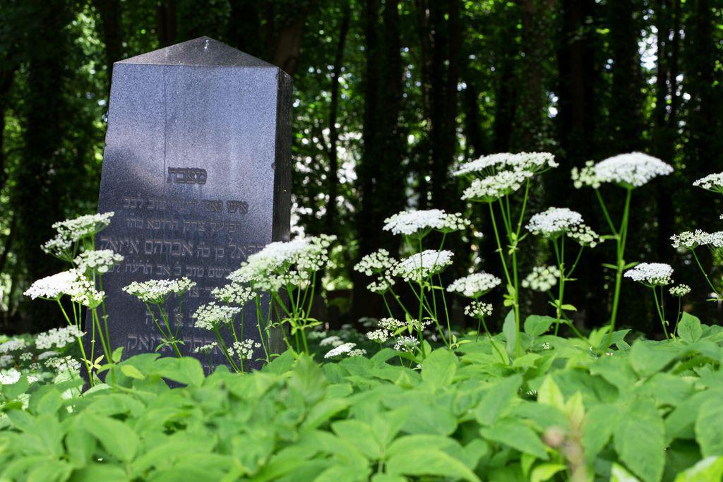 Le piante rispondono in un modo davvero strano quando crescono vicino a cadaveri umani