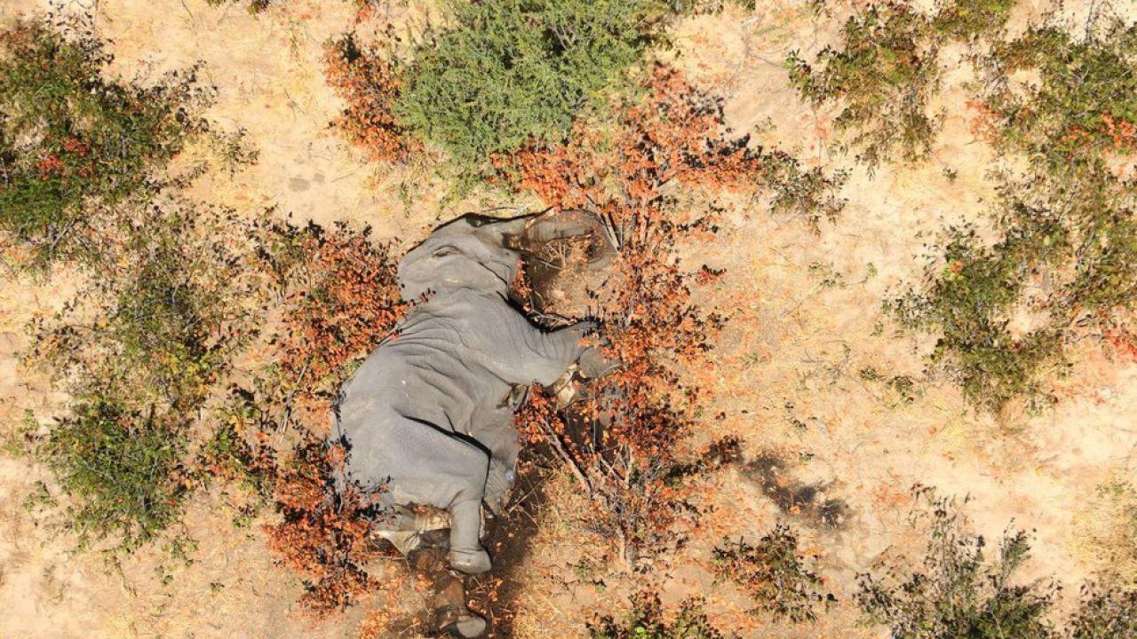 Morte degli elefanti Botswana: finalmente si è scoperto chi è il famigerato killer
