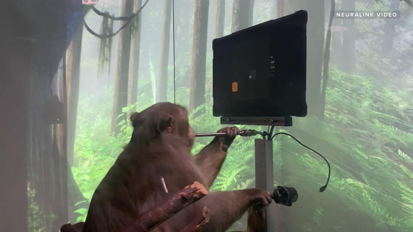 Neuralink di Elon Musk mostra la scimmia che gioca a Pong con la mente in un video