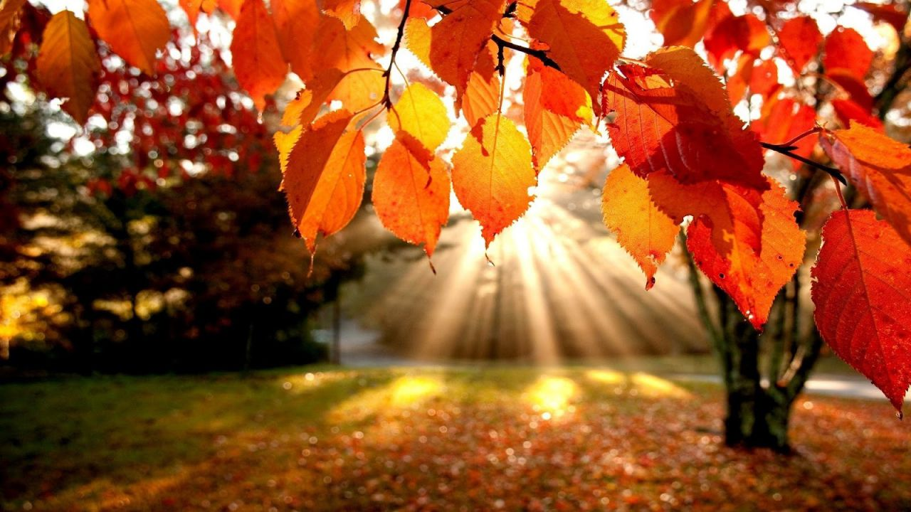 Perché le foglie cambiano il loro colore durante l'autunno?