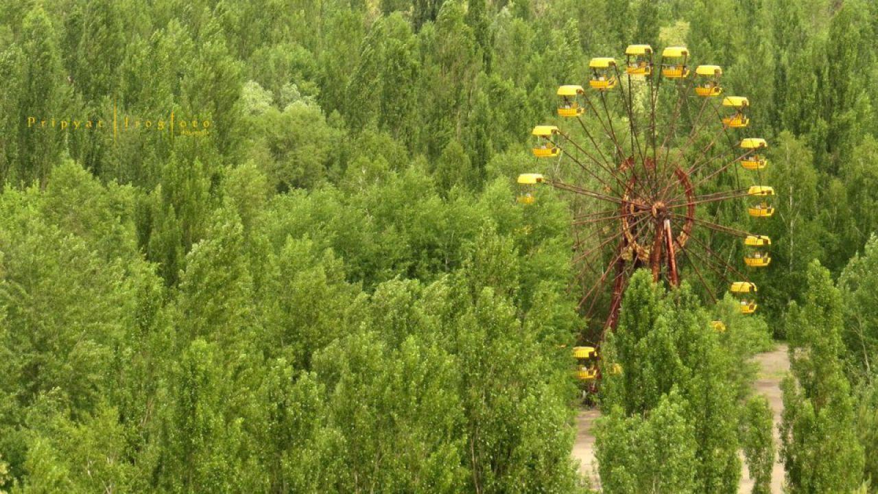 Perché le piante di Chernobyl riescono a sopportare le massicce dosi di radiazione?