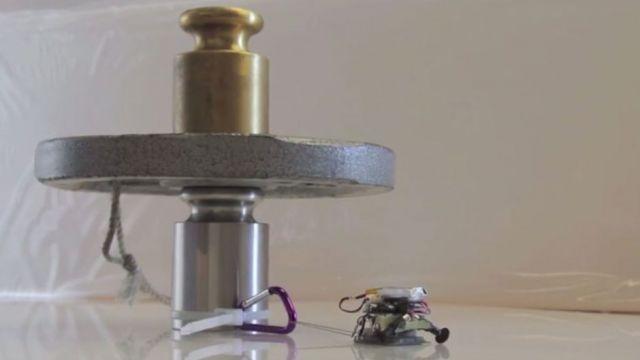 Piccoli robot riescono a sollevare oggetti fino a 2000 volte il loro peso