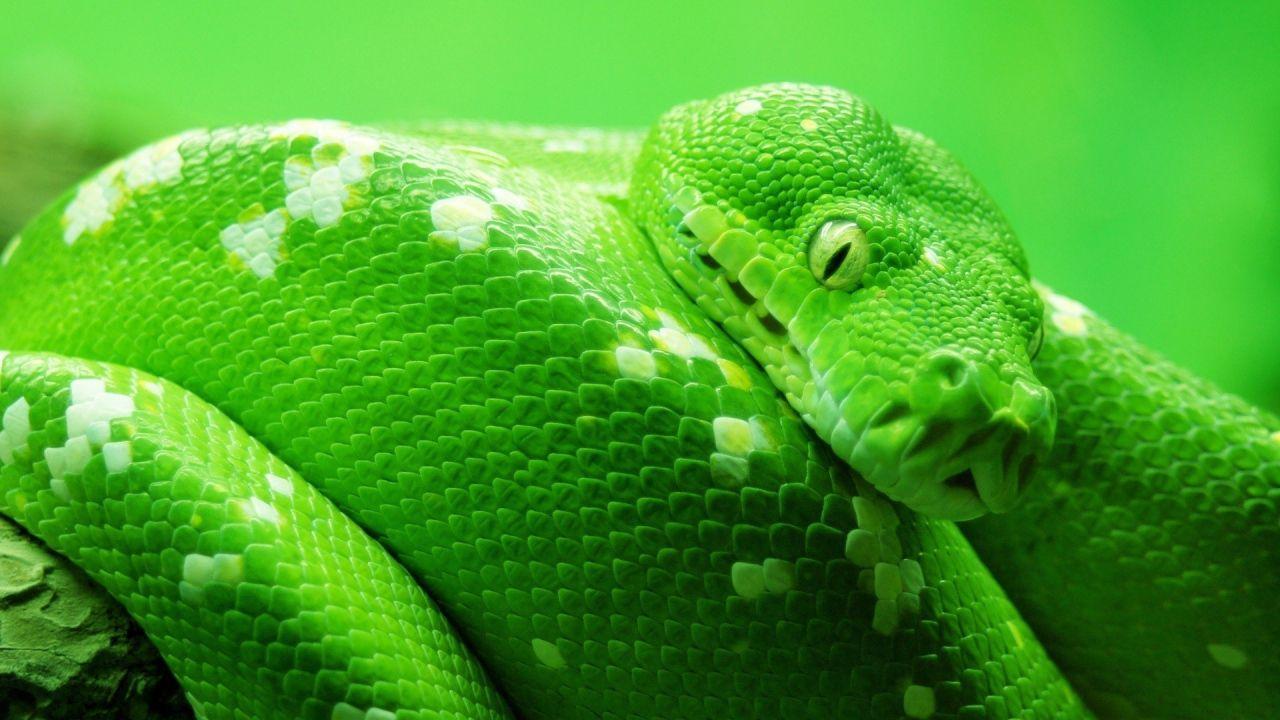 PlayStation 4: giocatore brasiliano trova un serpente morto dentro la console